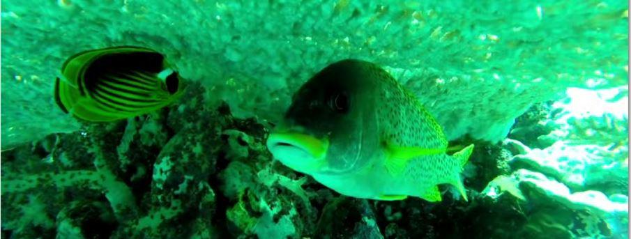 Pesci verdi sul fondale