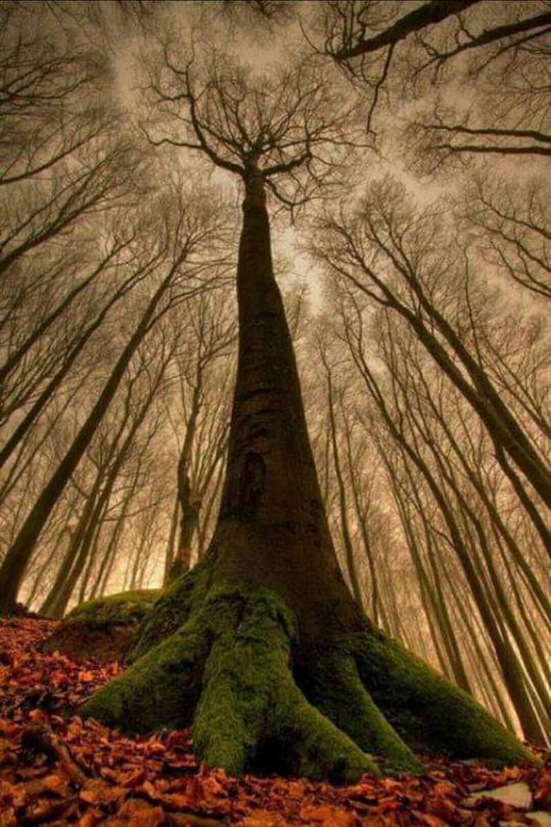 albero maestoso visto dal baso