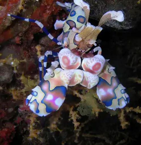 Corallo Colorato