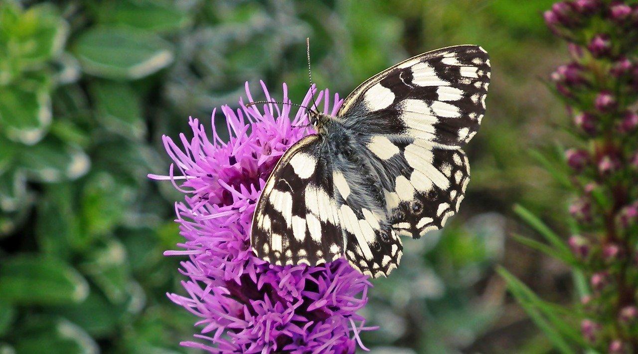 Farfalla su un fiore