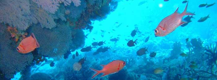 Pesce arancione nell'oceano