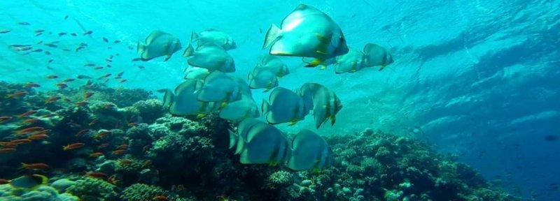 Pesci vicino alla barriera corallina