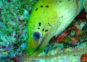 Pesce giallo nell'oceano